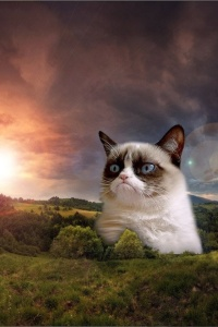 piccit_my_grumpy_cat_wallpaper_349882992